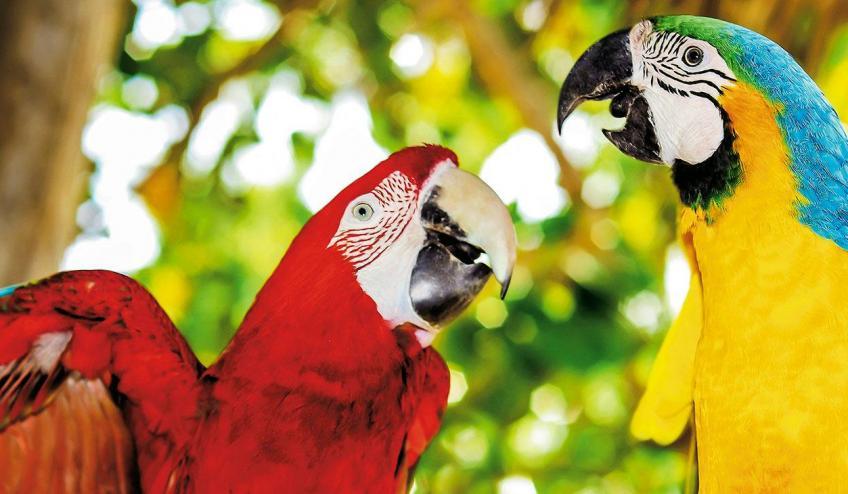 Dominikos Respublika poilsis
