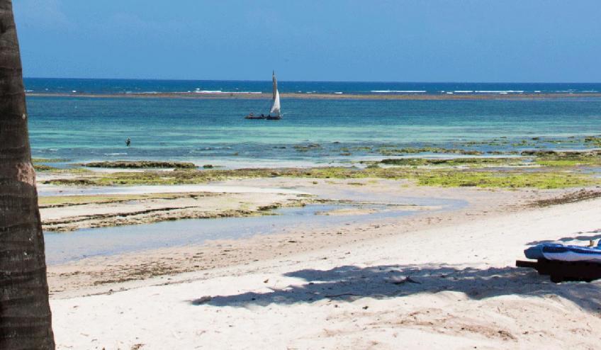 jacaranda indian ocean beach resort kenia diani beach 175 57337 48587 1920x730