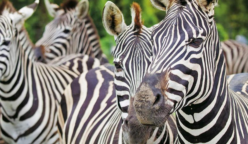 kenia i tanzania b 196 67133 67333 1920x730