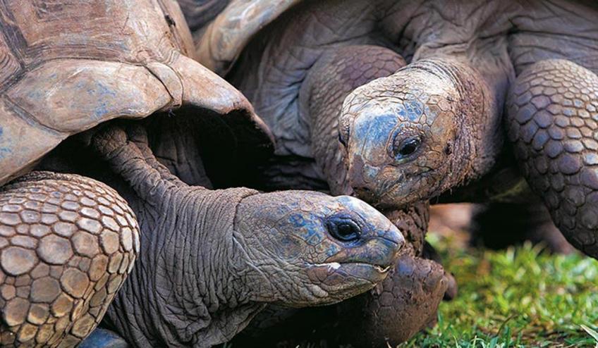 westin turtle bay resort and spa obiazd wstep do raju mauritius port louis 3574 80728 101298 1920x730