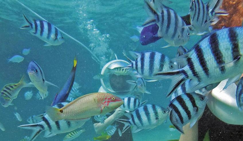 westin turtle bay resort and spa obiazd wstep do raju mauritius port louis 3574 80731 101304 1920x730