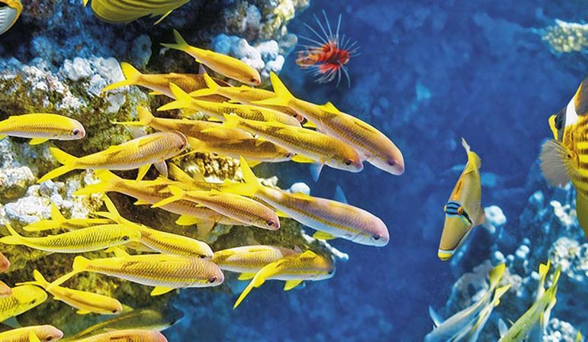 westin turtle bay resort and spa obiazd wstep do raju mauritius port louis 3574 80734 101310 1920x730
