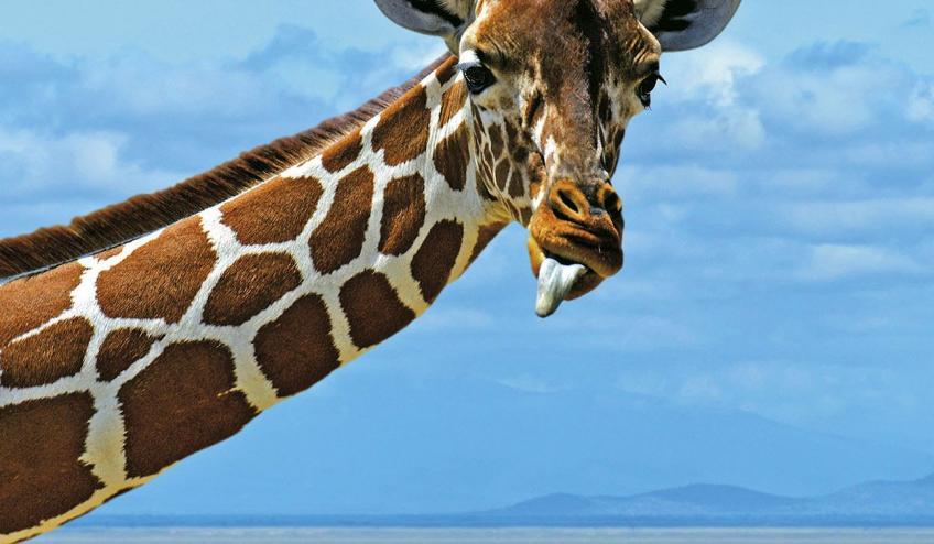 voyager beach kss kenia nyali 188 67047 67160 1920x730