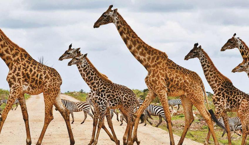 kenia i tanzania w poszukiwaniu zrodel nilu 2360 68350 71706 1920x730