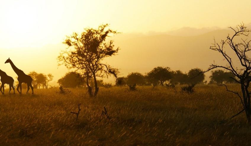 kenia tanzania i zanzibar safari z wypoczynkiem 266 103321 152469 1920x730