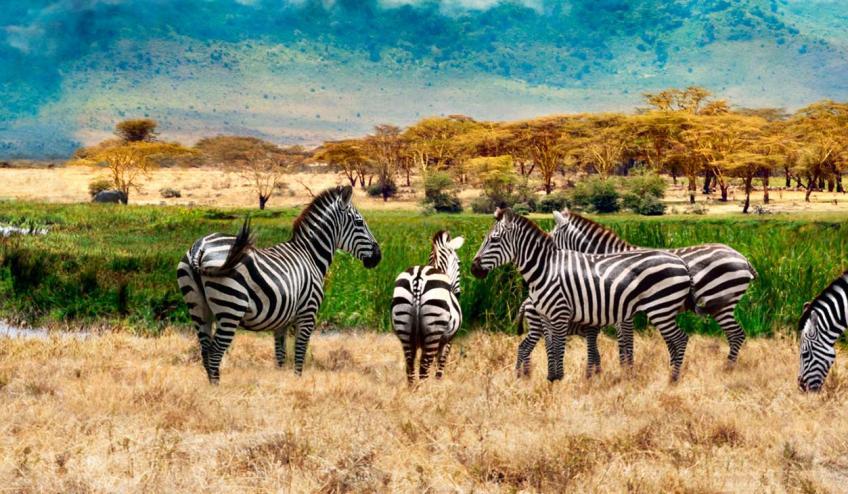 kenia tanzania i zanzibar safari z wypoczynkiem 266 103323 152473 1920x730