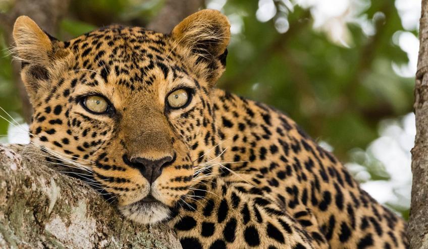 kenia tanzania i zanzibar safari z wypoczynkiem 266 103327 152481 1920x730