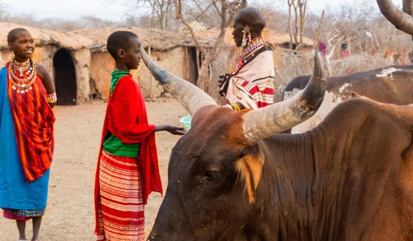 kenia tanzania i zanzibar safari z wypoczynkiem 266 103325 152477 1920x730