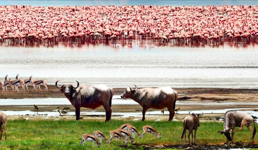 kenia tanzania i zanzibar safari z wypoczynkiem 266 103324 152475 1920x730