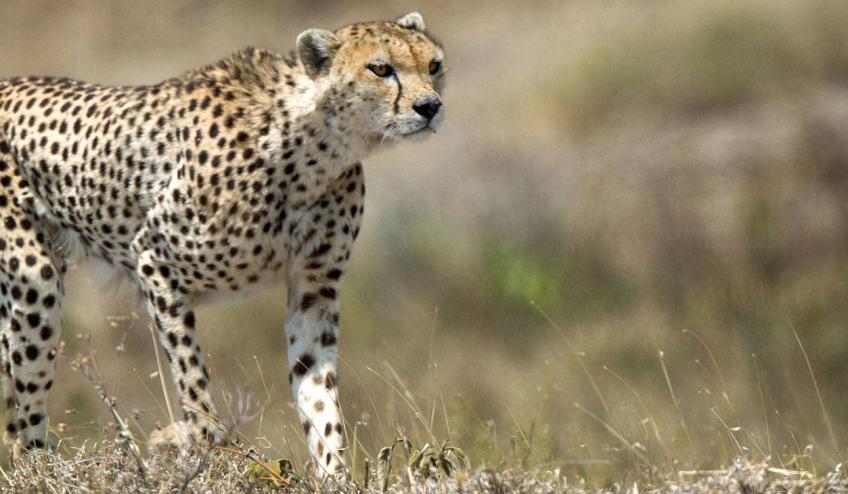 kenia tanzania i zanzibar safari z wypoczynkiem 266 103328 152483 1920x730