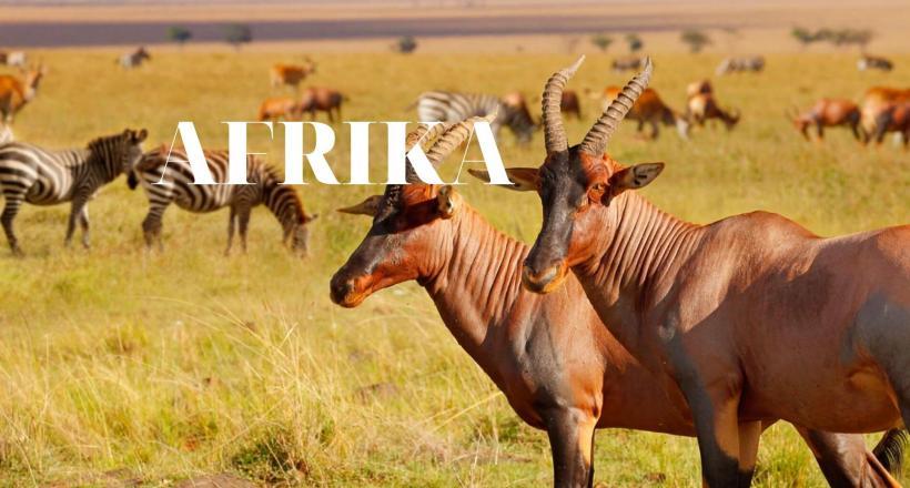 AFRIKA (3)