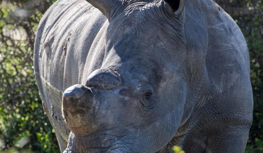 rpa botswana zimbabwe wyprawa do wodospadow wiktorii 875 103503 152875 1920x730