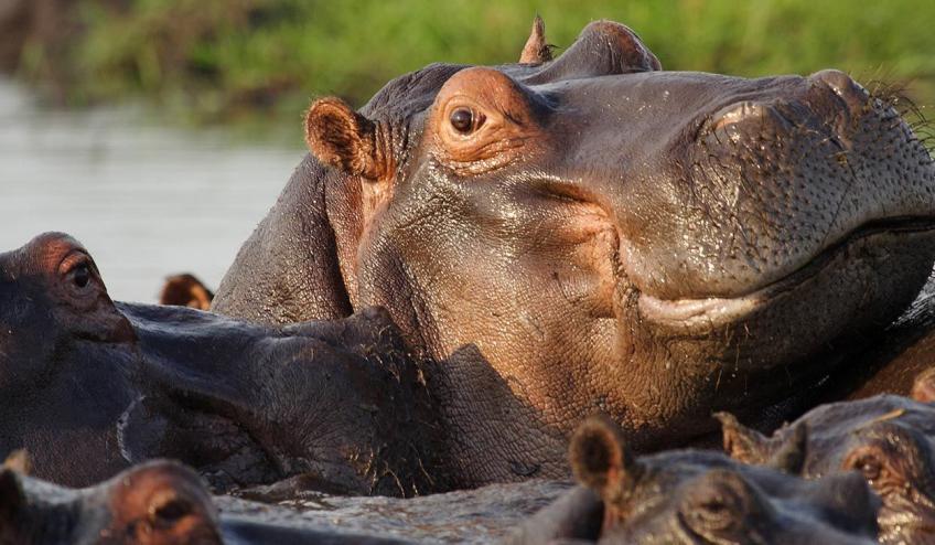 rpa botswana zimbabwe wyprawa do wodospadow wiktorii 875 103490 152849 1920x730