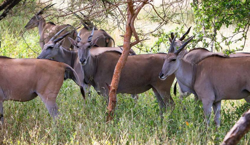 afryka naturalnie dzika 2862 122488 263285 1920x730