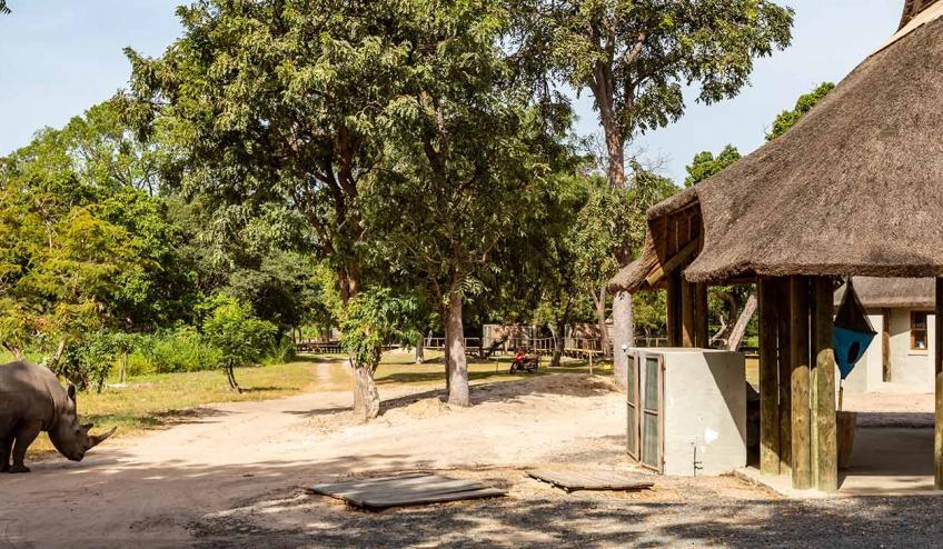 senegambia spacer z lwami de luxe 4559 122967 264800 1920x730