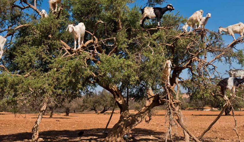 maroko pustynny offroad 2734 109135 165627 1920x730