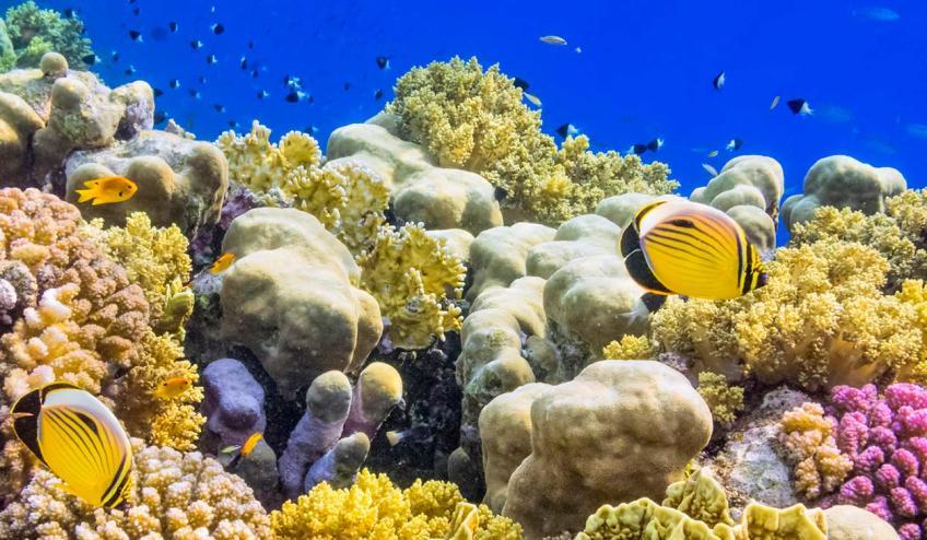 egipt hurghada holiday tour 4654 108273 163641 1920x730
