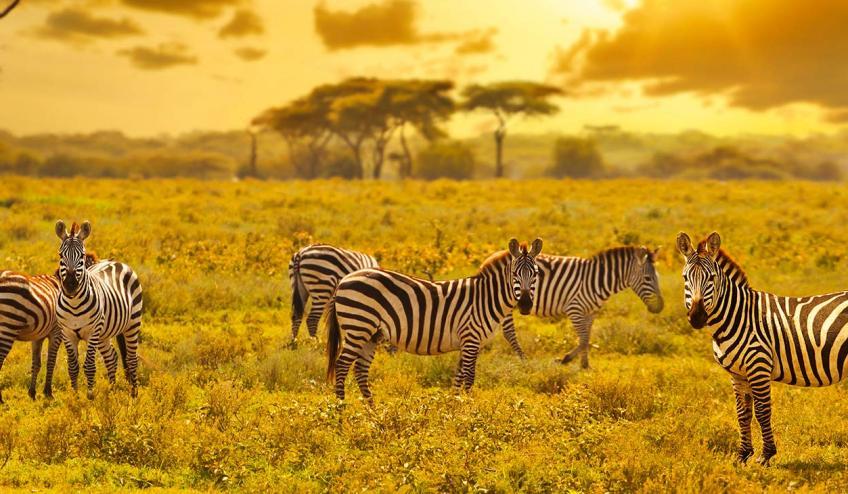 kenia i tanzania w poszukiwaniu zrodel nilu 2360 107250 161214 1920x730
