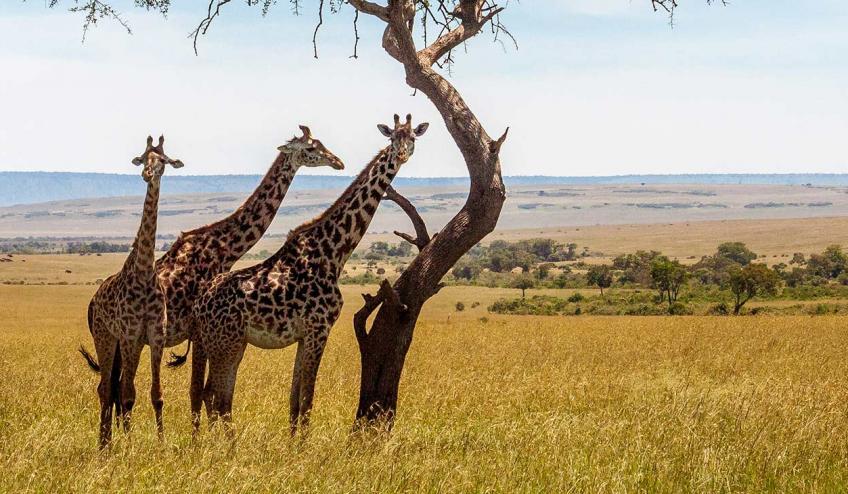 kenia i tanzania w poszukiwaniu zrodel nilu 2360 110675 169136 1920x730