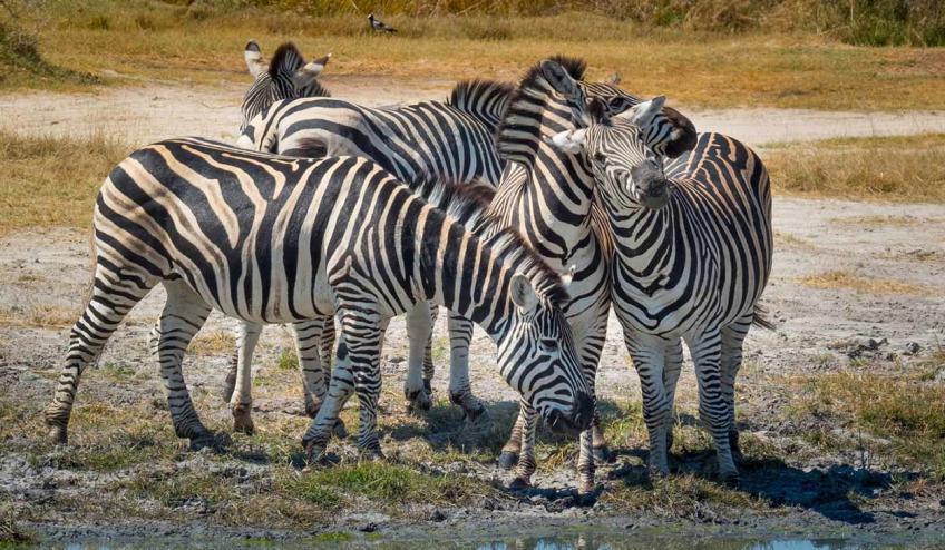 kenia i tanzania w poszukiwaniu zrodel nilu 2360 110678 169142 1920x730