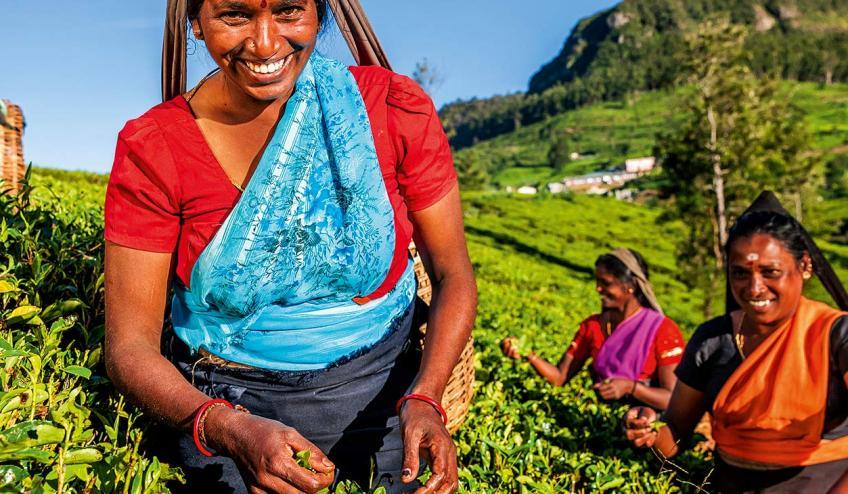 sri lanka smak herbaty z cynamonem 255 107267 161248 1920x730