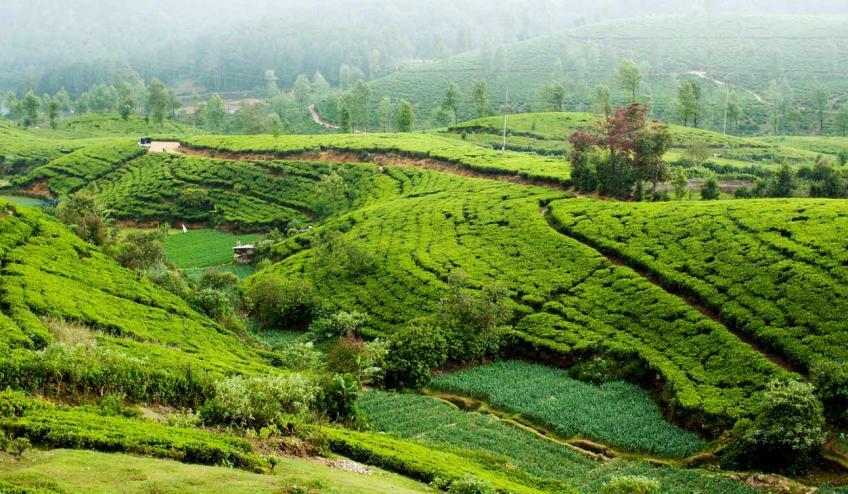 sri lanka smak herbaty z cynamonem 255 102421 150517 1920x730